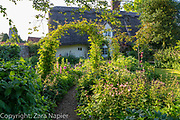 Thatched Cottage garden with rose arches and path leading through borders of Alliums, hardy geraniums, Aquilegia, Iris and Lupinus - lupins in June. Clover Cottage