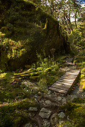 Landscape with view of a small wooden footbridge across a stream, Routeburn Track, South Island, New Zealand