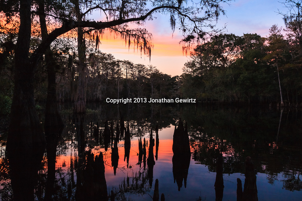Sunset and forest reflections play on silhouetted cypress knees near the shore of the lake at Ingram Crossing on Fisheating Creek in Florida's Fisheating Creek Wildlife Management Area. WATERMARKS WILL NOT APPEAR ON PRINTS OR LICENSED IMAGES.