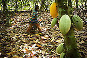 Tanic Kouakou, 8, walks back from fetching water on his father's cocoa plantation near the town of Moussadougou, Bas-Sassandra region, Cote d'Ivoire on Monday March 5, 2012.