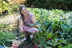 Senior woman harvesting chard in vegetable garden, Altoetting, Bavaria, Germany