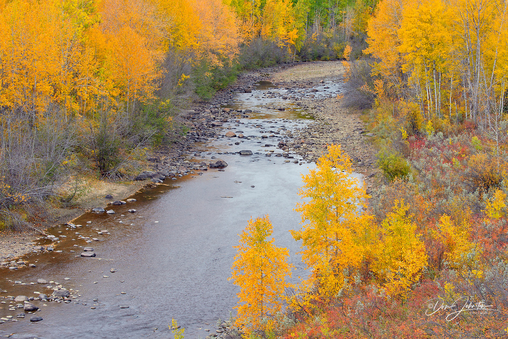 Autumn aspens and the Meikie River, Manning, Alberta, Canada