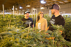 EXCLUSIVE: Meghan Markle's nephew Tyler Dooley is a Cannabis farmer who is planning a new drug called Markle's Sparkle. 25 year old Tyler is too busy growing Millions of Dollars worth of the sticky icky at his greenhouse in Oregon to worry about the upcoming big day. 16 Apr 2018 Pictured: Fred Tamayo, Tracey Anne Dooley and Tyler Dooley. Photo credit: MEGA TheMegaAgency.com +1 888 505 6342