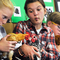 Savannah Jessee, 14, left, and Ivy Ritter, 13, get a little silly while waiting for the judges to call the division Ritter was showing her chicken in during the Crook County Fair in Prineville.