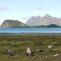 Stromness Bay, South Georgia, Antarctica.