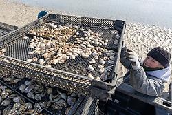 Lynne Fox Loading Oyster Trays