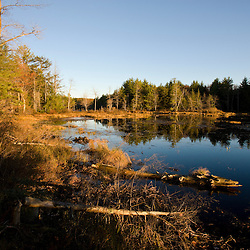 Early morning.  Freshwater marsh near Page Brook and Lake Winnipesauke in Meredith, New Hampshire.