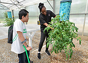 4-H ambassador Caleb Kinzinger, 16, from Freeburg, Ill and Jackie Joyner Kersee look at an upside-down tomato plant inside the greenhouse at the urban garden on Thursday, May 30, 2019 in East St. Louis, Ill. (Tim Vizer/AP Images for National 4-H Council)