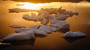 Icebergs bathing in evening sunlight, Jökulsárlón, Iceland