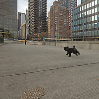 A dog scampers down a plaza north of the U.N. Building in New York City.