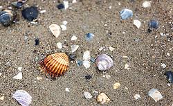 THEMENBILD - Muscheln im Sand. Lignano ist ein beliebter Badeort an der italienischen Adria-Küste, aufgenommen am 15. Juni 2019, Lignano, Italien // Mussels in the sand. Lignano is a popular seaside resort on the Italian Adriatic coast on 2019/06/15, Lignano Sabbiadoro, Italy. EXPA Pictures © 2019, PhotoCredit: EXPA/ Stefanie Oberhauser