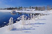 Hoarfrost at Jessica Lake<br /> Whiteshell Provincial Park<br /> Manitoba<br /> Canada