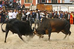 April 14, 2017 - Kathmandu, Nepal - Bulls fight during a fair in Kathmandu, Nepal on Friday, April 14, 2017. (Credit Image: © Skanda Gautam via ZUMA Wire)