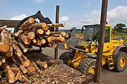 Freshly cut trees from sustainable woodland are stacked on an airfield in Suffolk, United Kingdom,  to dry out on the disused concrete runway.  The drying process takes about a year.  This area of the UK is rich in woodland and this wood can provide a sustainable source of heat when used in efficient boilers. This is exactly what local schools are doing thanks to the local council which is managing the resource while supplying wood-fuel for heating. The initiative saves the schools energy, reduces CO2 emissions by 1,200 tonnes a year and cuts their fuel bills by up to 25%.  Suffolk County Council won an Ashden Award for its approach to susatainability.