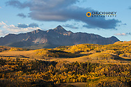 Aspen groves at first light with Wilson Peak in the Uncompahgre National Forest, Coloradfo, USA