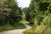 Idless Woods spot the tree