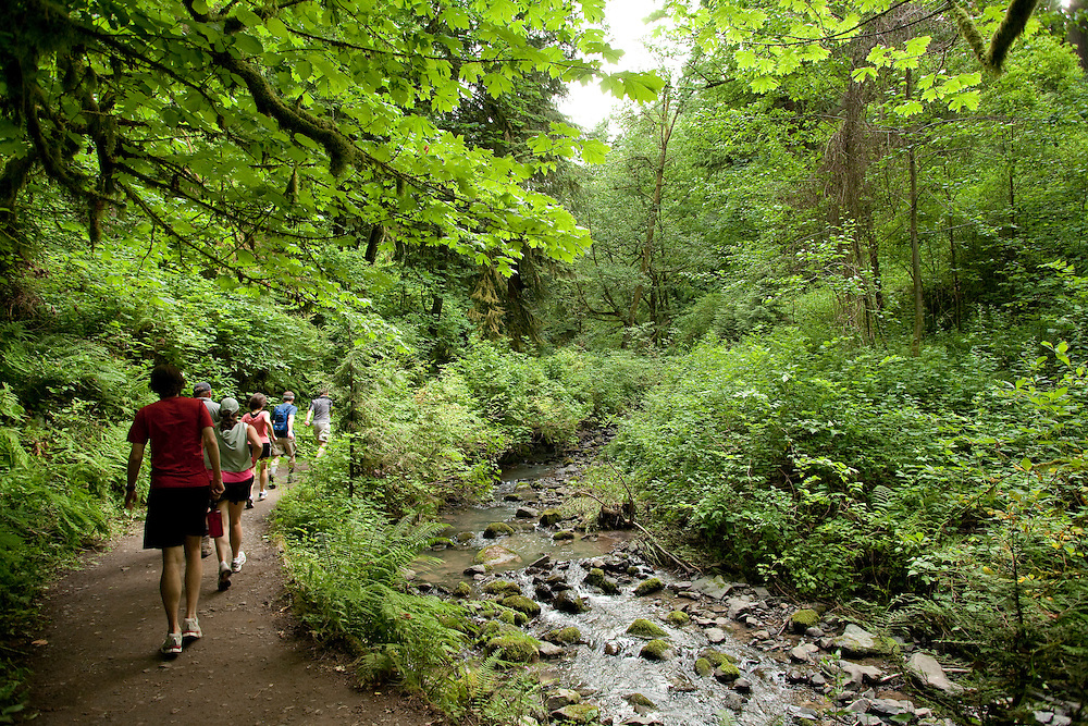 Upper Macleay TRail in Forest Park, Portland Oregon
