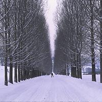 Villager cross country skis on poplar lined road near Zarnesti.