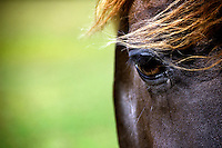 Close up of a prized horse in the pasture.