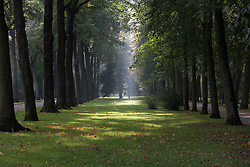 Trees in a park, Bayreuth, Bavaria, Germany