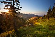 Hurricane Ridge, Olympic National Park. Washington.