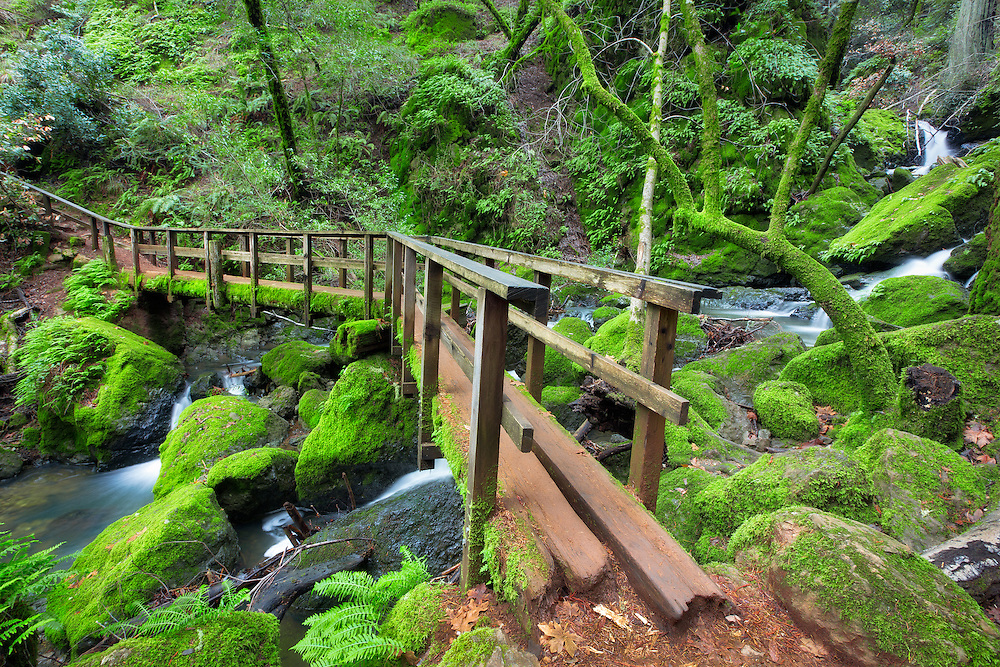 Cataract trail in Fairfax, California is one of the most magical lush places imaginable during the rainy season. It comes alive with a million shades of green, dripping with ferns, mosses and lichens. Waterfalls abound in a surround sound symphony of beauty.
