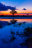 Twilight at a pond, Kwando Concession, Linyanti Marshes, Botswana.
