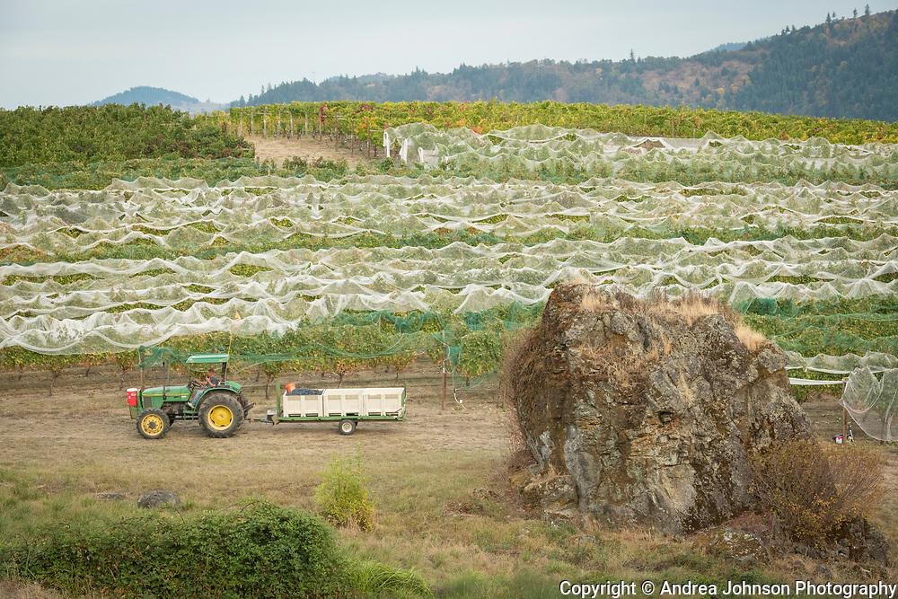 Abacela harveset, Umpqua Valley, Roseburg, Oregon
