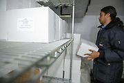 Cold store assistant manager Eddy Godoy sorts boxes of vaccines inside a refrigerated storage area at the PAI (Programa Ampliado de Inmunizaciones) offices in Tegucigalpa, Honduras, on Wednesday April 24, 2013..
