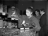 1956 - Canary and Bird Society of Ireland Annual Show.