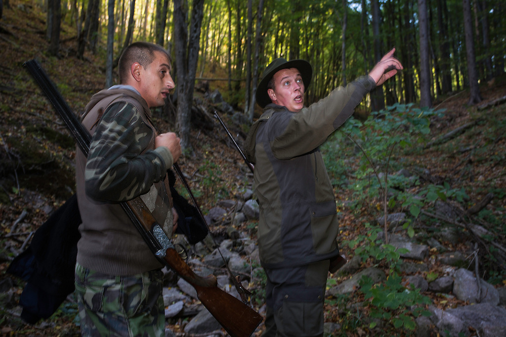 Romanian forester pointing out stand to a fellow hunter during a driving hunt for Wild boar (Sus scrofa) in the forest area outside the village of Mehadia, Caras Severin, Romania.