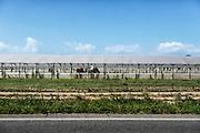 Campi agricoli nei pressi di Sabaudia (Latina), Giugno 2014.  Christian Mantuano / OneShot