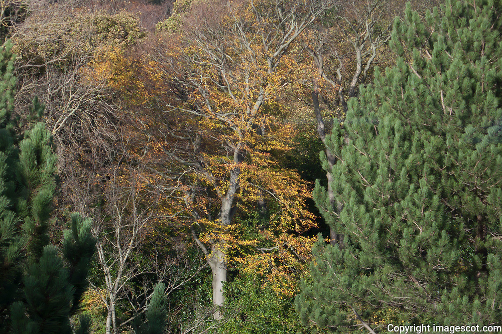 Mixed woodland, autumn