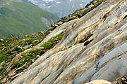 Glacial polish (Schlatenkees, Großvenediger), High Tauern National Park (Nationalpark Hohe Tauern), Central Eastern Alps, Austria | Gletscherschliff (Detersion) des Schlatenkees. Großvenediger in der Venedigergruppe, Nationalpark Hohe Tauern, Osttirol in Österreich