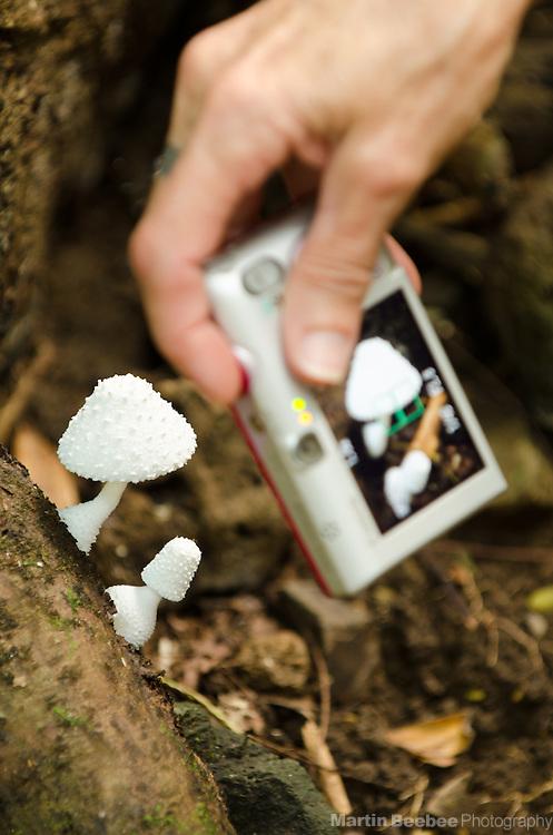 Taking a picture of mushrooms on the Kuamo'o-Nounou Trail, Kauai, Hawaii