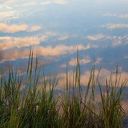 Reflections in a tidal marsh at the Massachusetts Audubon Wellfleet Bay Wildlife Sanctuary in Wellfleet, Massachusetts. Cape Cod.