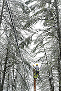 Ian McNulty, of Green Mountain Power, and his coworker Jared Allen, not pictured, splice a new section into an electric line in Pomfret, Vt., after a tree fell on the wires causing them to ground out Friday, April 16, 2021. (Valley News - James M. Patterson) Copyright Valley News. May not be reprinted or used online without permission. Send requests to permission@vnews.com.
