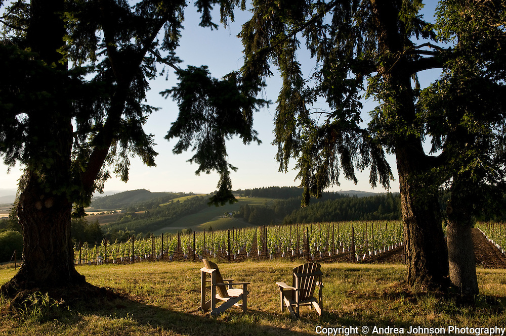 View from top of Soter's vineyard, Carlton, Willamette Valley, Oregon