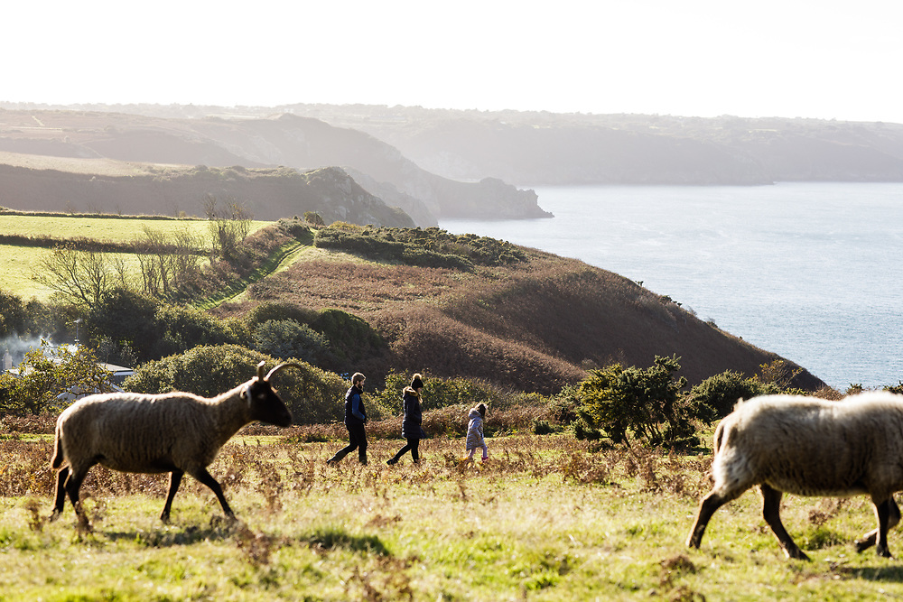 Family exploring the cliff paths on the north coast of Jersey with the view of the sea and headland beyond and sheep grazing in the field