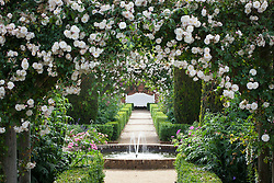 View towards fountain and white bench in the rose garden at Mottisfont. Rosa 'Adélaïde d'Orléans' on the arches, low box hedges