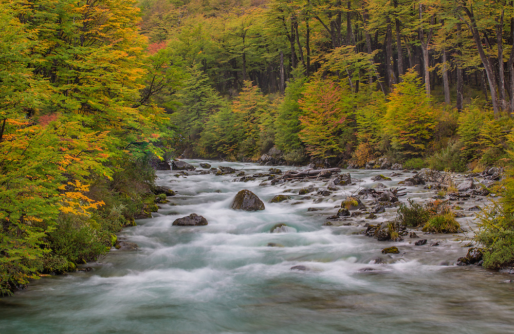 An icy glacial river meanders through an enchanting forest as autumn colors begin to show in Patagonia's Los Glaciares National Park, Argentina.