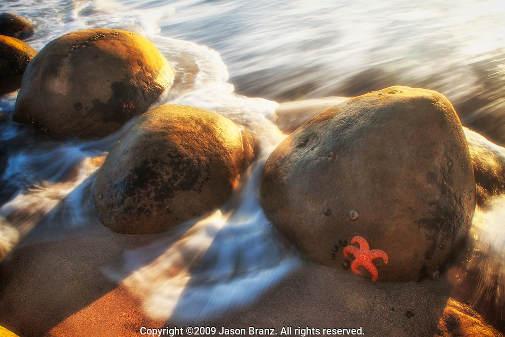 Starfish on a rock with incoming tide on Bowling Ball Beach, Mendocino County, California.