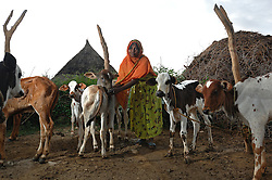 """Kadija stands with her cows outside her home in  Barentu, Eritrea august 25, 2006. Kadija is a traditional birth assistant as well as a recipient of a donkey from the women's union """"Hamade"""". (Ami Vitale)"""