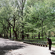 A Panoramic view of a busker playing a saxaphone in Central Park, Manhattan, New York City, USA. 23rd July 2011. Photo Tim Clayton