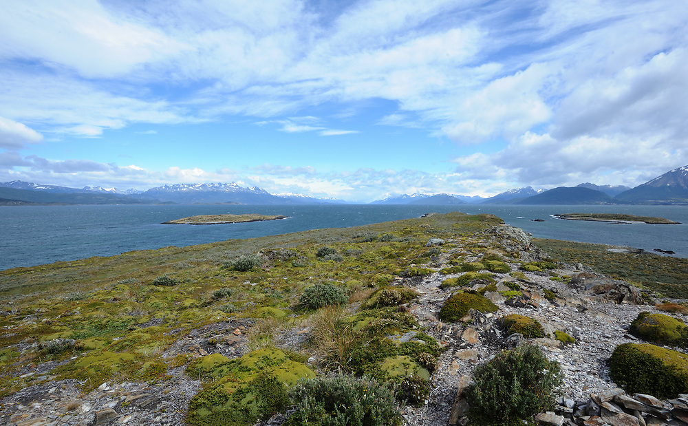 The Beagle Channel and windswept vegetation on Isla H with Argentina on the rigt and Chile to the left. Ushuaia, Tierra del Fuego, Argentina.