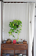 phothos plant inside house with Japanese style closet