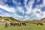 Wild horses grazing under clouds in Theodore Roosevelt National Park, North Dakota, USA
