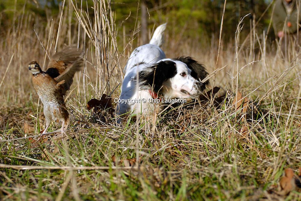FLUSHING DOG STOCK PHOTO IMAGE