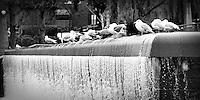 Bellevue, WA Downtown Park waterfall with seagulls - bw 10x20