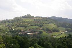 Colheita da Uva, no Vale dos Vinhedos,  municipio de Bento Gonçalves, serra gaucha.FOTO: Jefferson Bernardes/Preview.com